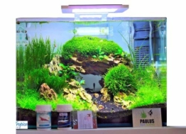 Blau Aquaristic - Nano-Aquarium Square 28 Liter - Starter Komplettset LED, Filter - 1